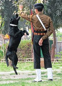 Army dogs for police