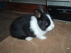 Black and White Baby Dwarf Bunnies (page 2) - Pics about space
