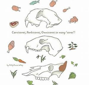 Carnivores  Herbivores  Omnivores So Many  U2018vores U2019  By