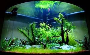 Aquarium Einrichten Anfänger : eckaquarium kaufen test erfahrungsberichte angebote ~ Lizthompson.info Haus und Dekorationen