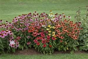 How to Plant Echinacea Seeds
