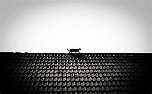Auf Dem Dach : katze auf dem dach foto bild tiere haustiere katzen bilder auf fotocommunity ~ Frokenaadalensverden.com Haus und Dekorationen