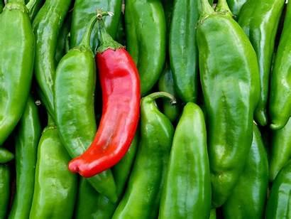 Mexico Chile Chili Pepper Chiles Sisneros Lou