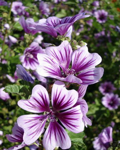 exotische potplanten met bloem kleine vaste bloeiende planten potplanten buiten schaduw