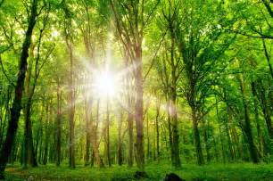 Trees with Sunlight in Forest
