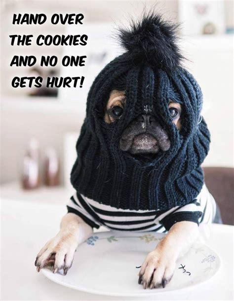 Funny Pug Meme - funny pug dog meme lol dogs being basic pinterest meme dog and animal