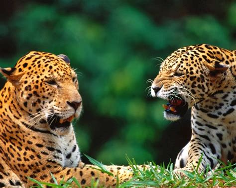 Free Amazing Animal Wallpapers - lovable images fish hd wallpapers free