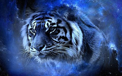 3d Wallpaper Hd Tiger by Black Background Tiger 3d