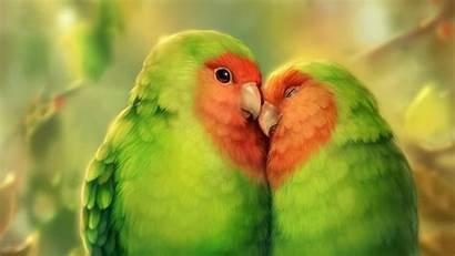 Birds Parrots Laptop Background Tablet Romance 1080p