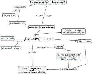 formation of acetyl Co-A