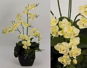 Künstliche Orchideen Im Topf : orchideen arrangement ii creme im schwarzen dekotopf cg k nstliche orchidee ebay ~ Watch28wear.com Haus und Dekorationen