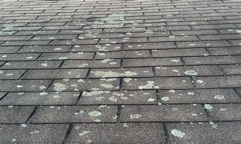 Citrashield Best Way To Repair Tar And Gravel Roof How A Leaking Tile Leak Metal Kensington Rooftop Gardens New Years Eve 2016 Installing Vent Pipe Flashing On Estimating Services London Fenchurch Street Mile High Roofing Reviews