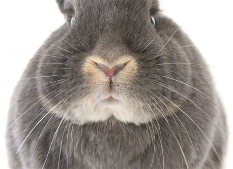 respiratory bacterial infection  rabbits petmd