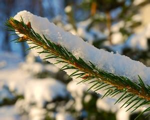 christmas trees in northern mi 10 reasons to buy a real northern michigan tree mynorth