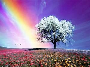 Rainbow, -, Bright, Colors, Wallpaper, 18591236