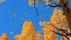 Leaves Nature Landscape Autumn Tree Forest Fall Wallpapers