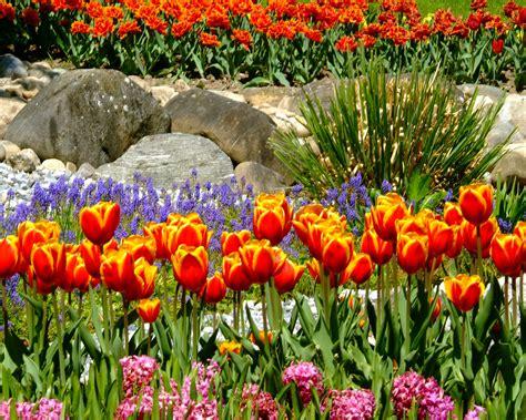 fiori in italia impronte di gatti immagini sulla natura