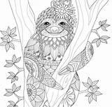 Adult Paradise Tropical Coloring Detailed Sloth Leaf Smile Mandala Sheets Pauper Peter Press sketch template