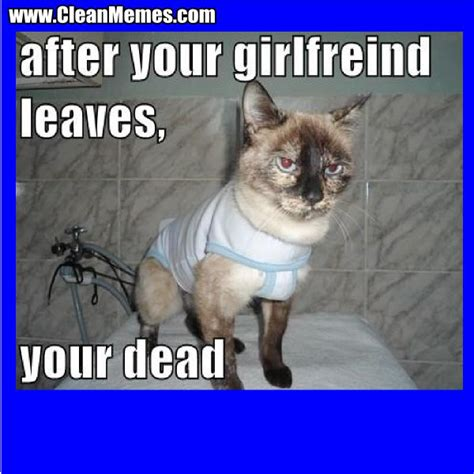 So we have found the funniest cat memes on the internet, for your personal enjoyment. #CleanMemes #CleanFunnyImages www.CleanMemes.com | Funny animals, Funny cat pictures, Funny ...