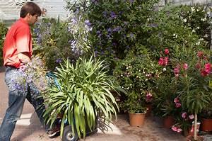 Kuebelpflanzen Fuer Terrasse : optimaler berwinterungsplatz verschafft k belpflanzen einen vorsprung das gr ne medienhaus ~ Orissabook.com Haus und Dekorationen