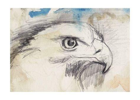 eagle  spirit animal art art drawing illustration