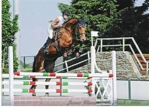 Sauts D U2019obstacles - Cso - Centre Equestre - Les Jaulini U00e8res