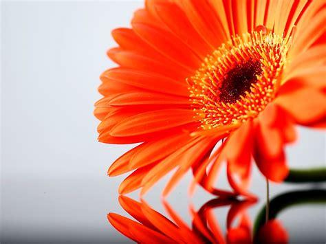 Orange Wallpaper Flower by My Background Orange Flower Background