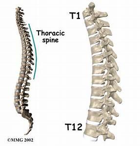 Thoracic Spine Anatomy | eOrthopod.com