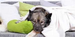 Mietwohnung Mit Hund : haltung von hunden in der wohnung ~ Lizthompson.info Haus und Dekorationen