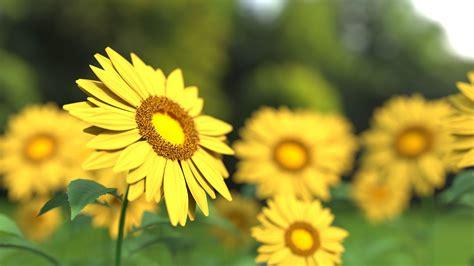 8 Yellow Flowering Perennials To Brighten Any Garden I ...