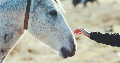 beneficial types  equine therapy