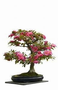 Bonsai Arten Für Anfänger : der ultimative bonsai test top beratung produktvergleich mai 2018 ~ Sanjose-hotels-ca.com Haus und Dekorationen