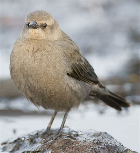 fall  bird id