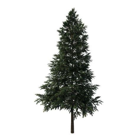 black spruce tree  model ds max files
