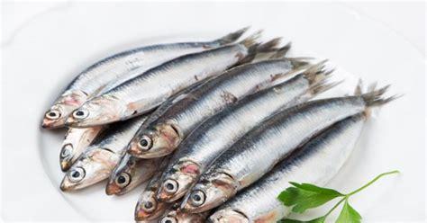 comment bien cuisiner comment bien cuisiner les anchois