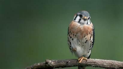 Birds Bird Wallpapers Desktop 1080p Angry Animals