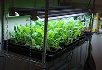 indoor vegetable garden ideas The Ultimate Indoor Vegetable Gardening Guide | SURVIVALIST.COM | SELF-RELIANCE | PREPAREDNESS