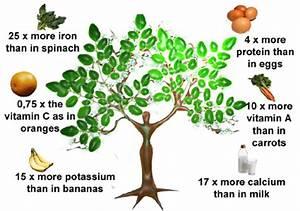 organic hemp oil india