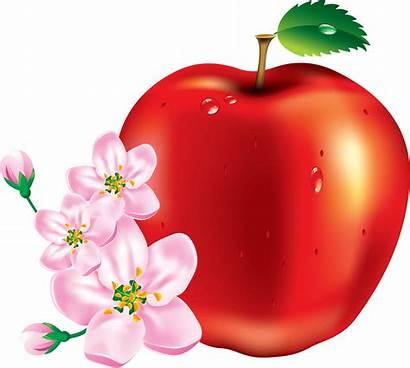 Apple Clipart Pink Pngimg Clip Aesthetic Fruit