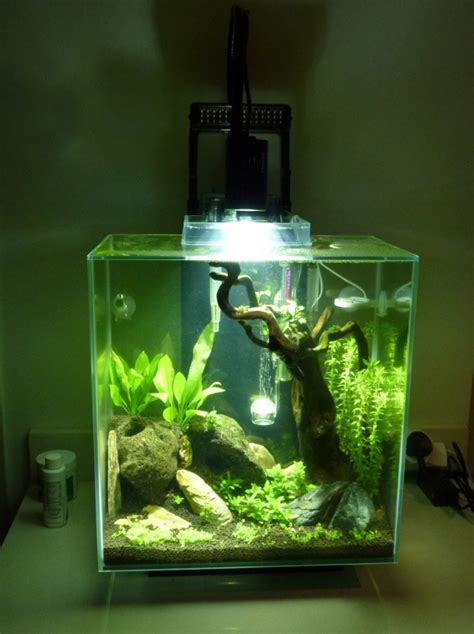 [aus] Beginner At Planted Tanks *help*  The Planted Tank