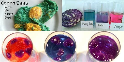 7 Red Cabbage Indicator Science Experiments   The Science