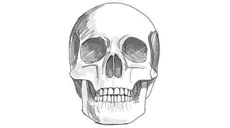 Skull Sketch Video Clip Royalty Free Pond