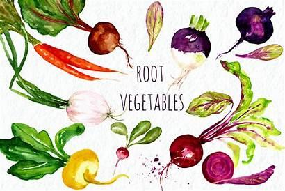 Vegetables Clip Watercolor Root Clipart Graphics Creative
