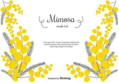 hand drawn mimosa vector background   draw hands