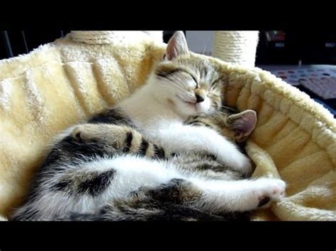 top  kitten  cat hugs cutest cats moments cats video