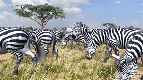 afrika bild animaatjes afrika