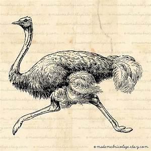 134 best bird - ostrich etc images on Pinterest ...