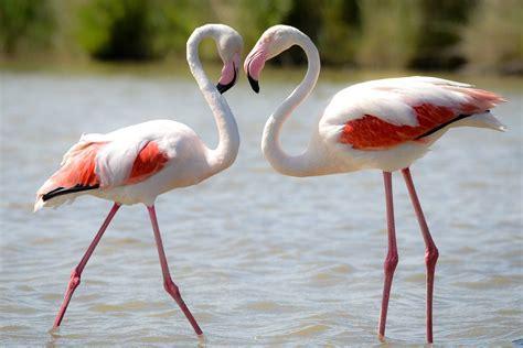 fun facts  trivia  flamingos