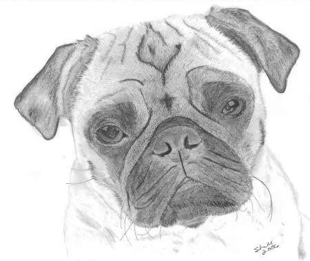 drawn face pug pencil   color drawn face pug