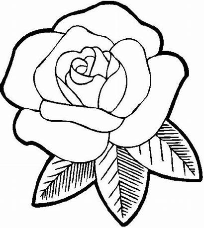 Flores Rosa Desenhos Pintar Colorir Casa